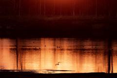 夕焼け色を写す