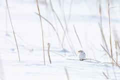 雪原に雪ん子