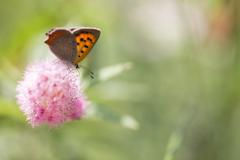 夏に舞った蝶たち