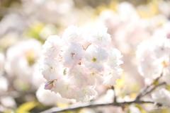 春の光、放つ