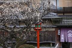 祇園・春近し