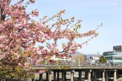 綺麗でも、京都では無名・・・?