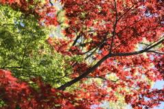 春・秋両方楽しむ