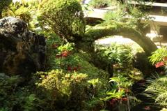 詩仙堂の森