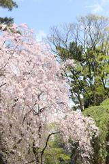 少し遅め・・じゃなく例年通りの春