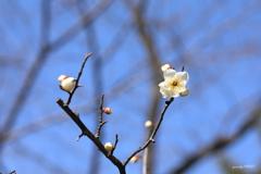建仁寺の春