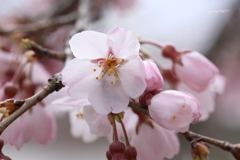 春、拡大!
