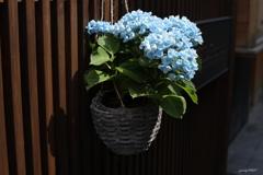 ここにも季節の花