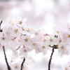 ふわふわな春