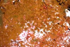川沿い紅葉