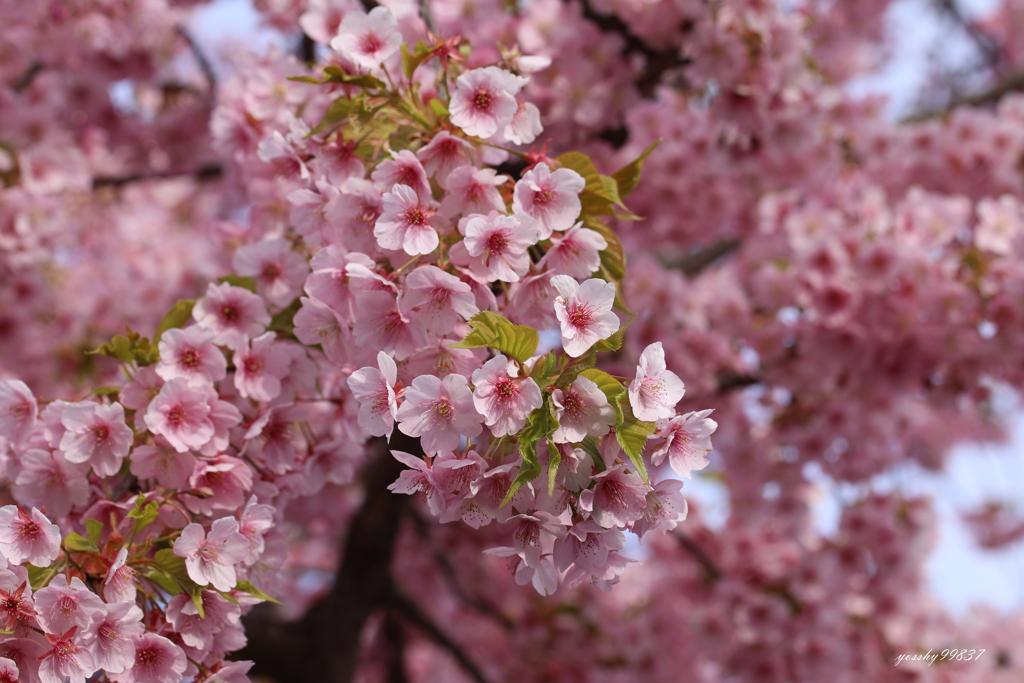 春色始まる!
