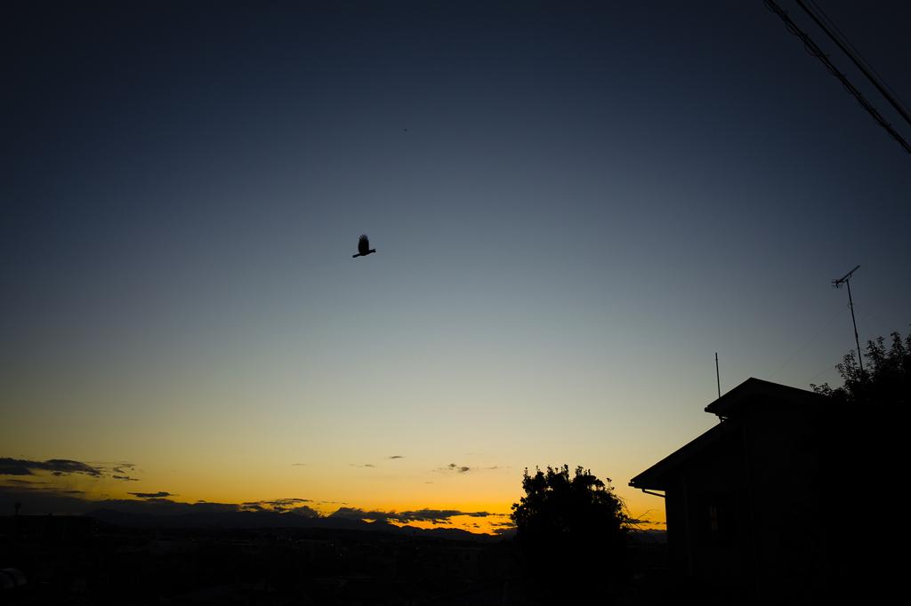 日暮れの烏