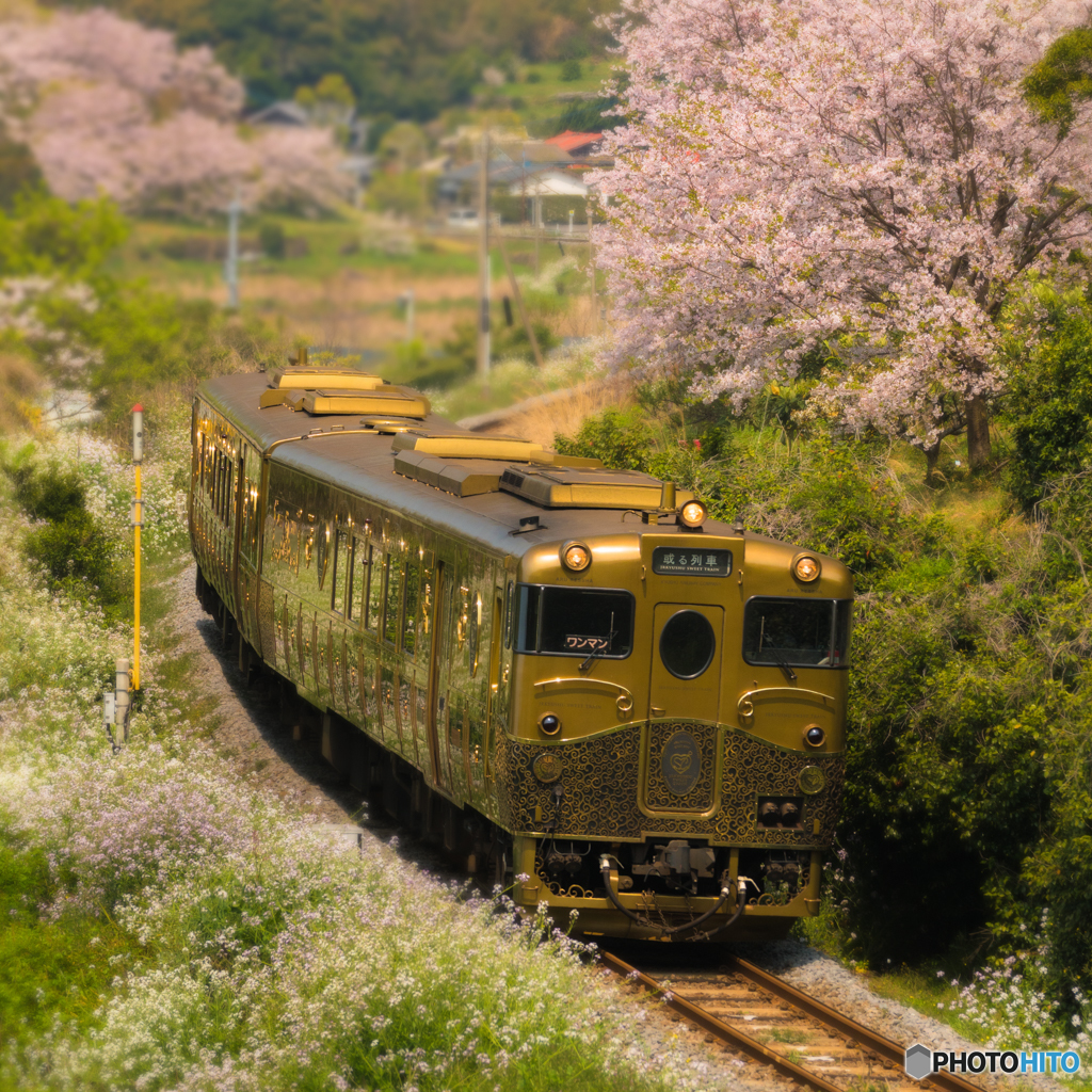 サクラと或る列車
