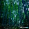 竹林のヒメホタル