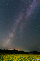 星空とひまわり畑