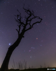 エントの木とオリオン座