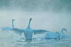 冬霧に舞う