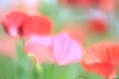 川辺の花畑2