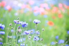 川辺の花畑