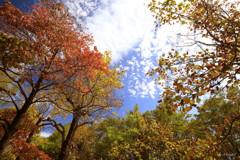 秋めく木々