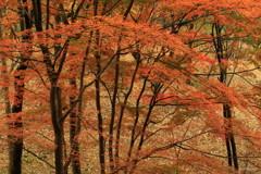 晩秋の粧い