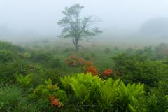 霧に覆われた高原の朝