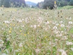 雑草と呼ばれても美しい