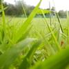 草原でねっころがって