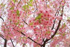 『見上げれば春』