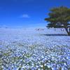『想い出は青色』