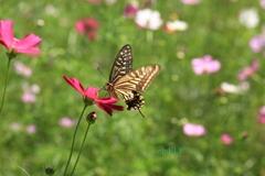 『Butterfly fall』