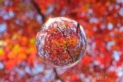 『秋を浮かべて』