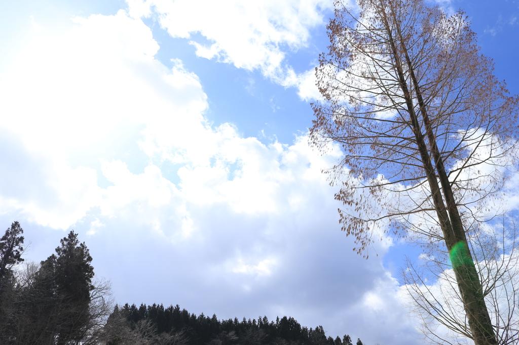 青い空、そよぐ…(大積)