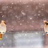 ふたり仲良く雪遊び