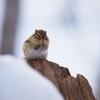 雪の中で・・・