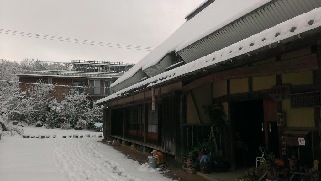 爆弾低気圧で杜もすっかり雪景色3(^O^)