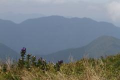 高地に咲く花