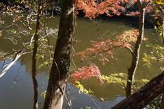 池に映える紅葉