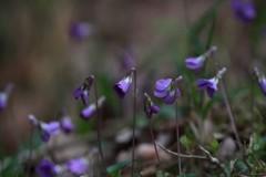 林間に咲く花
