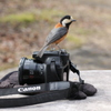 森のカメラマン
