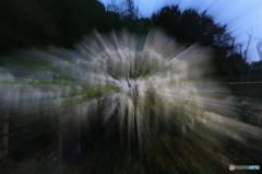 白藤の露光間ズーム