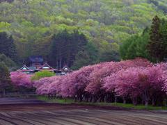2017.05.20 道南・里山桜(FINAL):日本の原風景