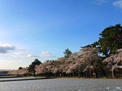 2016.05.06 桜咲く田園