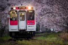 ~花の雲~ 桜駅