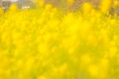 ~黄色い春うた~