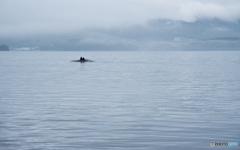 霧の朝に漕ぎ出でて