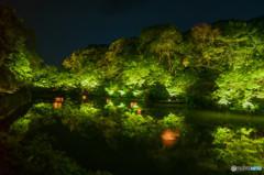 新緑の夜に浮かぶ