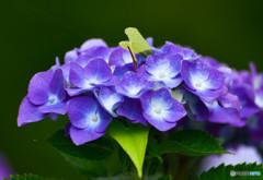 自生する花