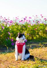 秋桜と御花見猫ちゃん