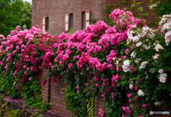 薔薇の要塞